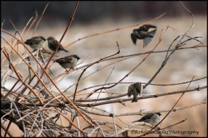 The little Sparrows watching me.