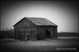 Abandoned barn in Gratiot County, Michigan