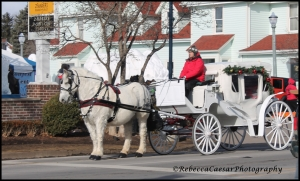There were several horse drawn wagons going down the Main Street. Beautiful sight.